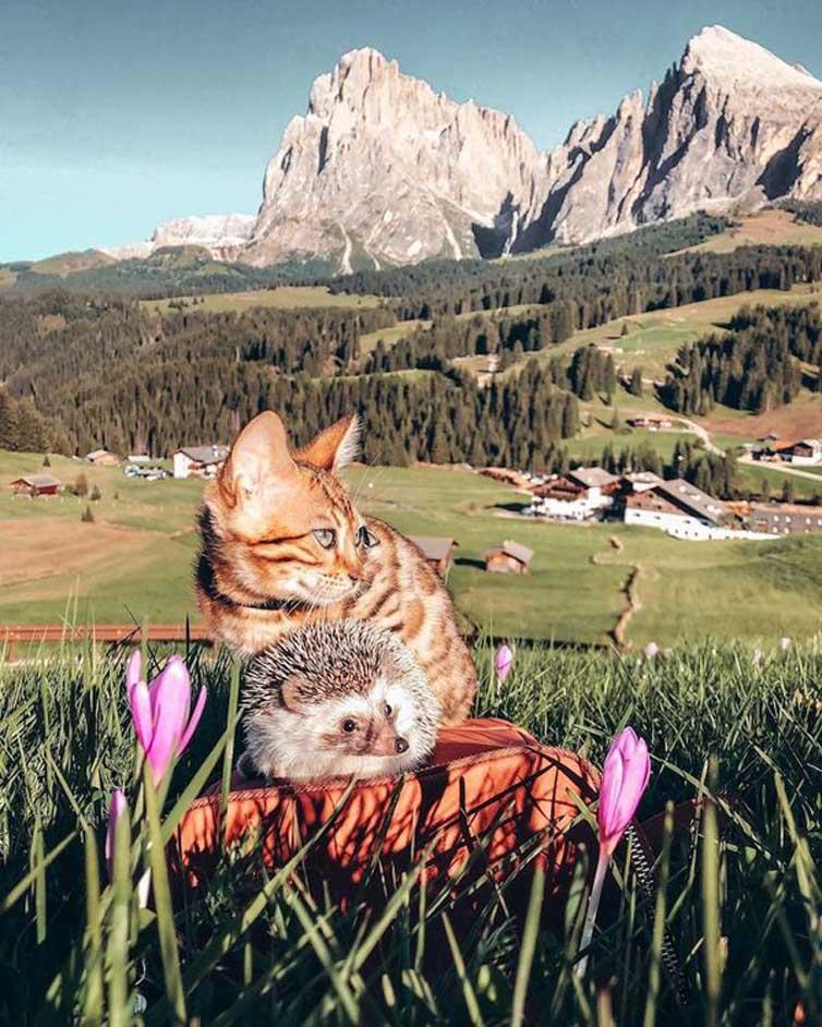 Un gatto insieme ad un riccio