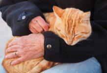 Gatto e carezze