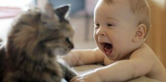 Gatto norvegese e bambini: come si comporta
