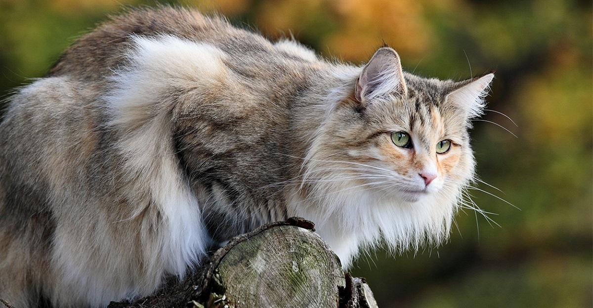 gatto norvegese su un albero