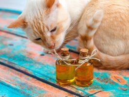 gatto con boccette d'olio