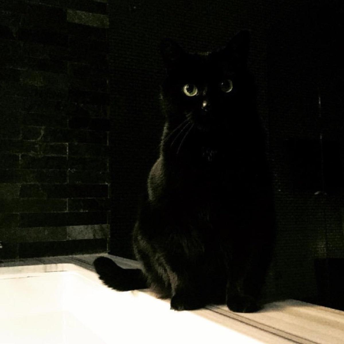 gatto nero su vasca da bagno