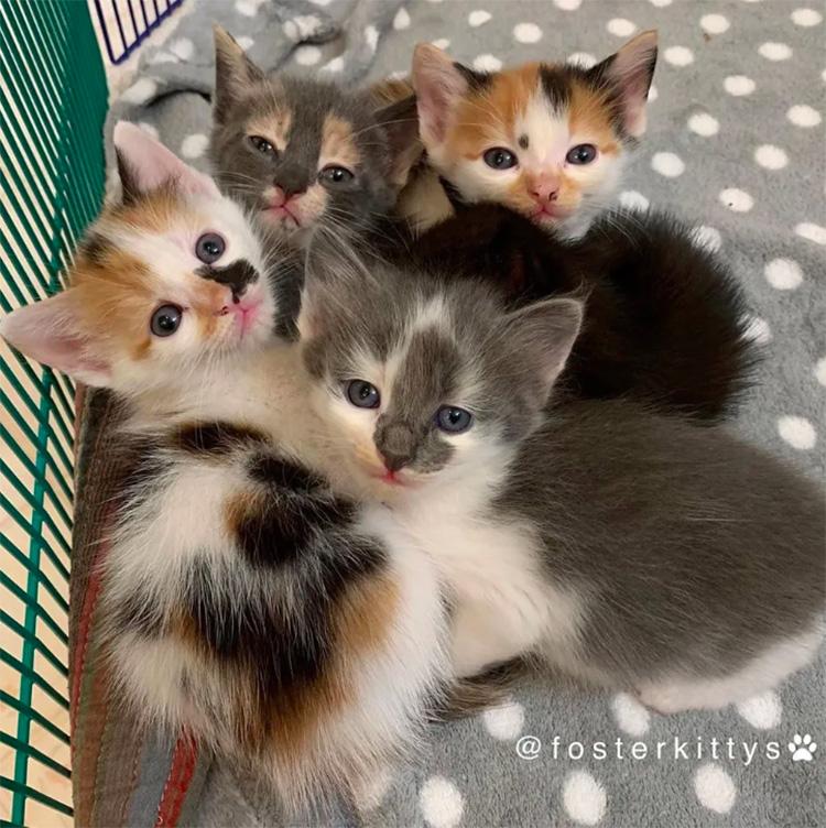 Cuccioli di gatto
