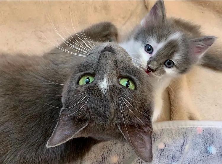 Due gatti che guardano in alto
