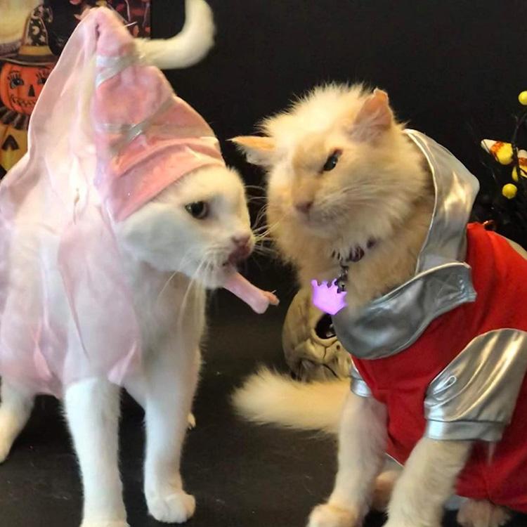 Due gatti vestiti