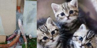 Gattini murati vivi a Cosenza