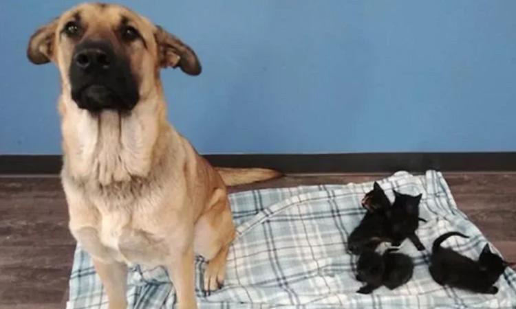 Gattini salvati da un cane