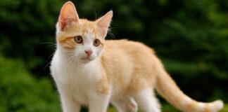 Gattino che guarda