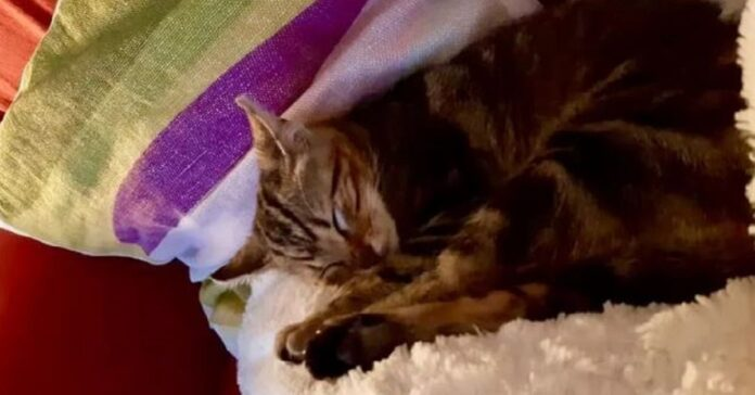 gattino lanciato da un'auto dorme felice