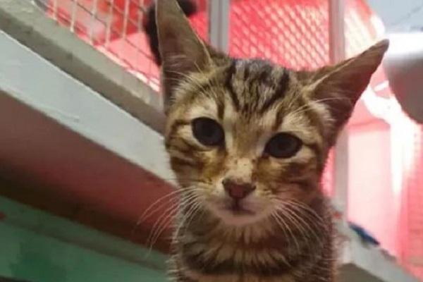 martino gatto lanciato come un sacco dei rifiuti