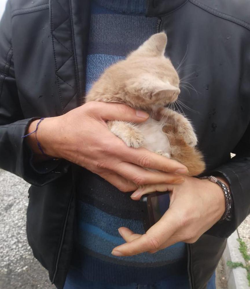 Gattino salvato a Roma