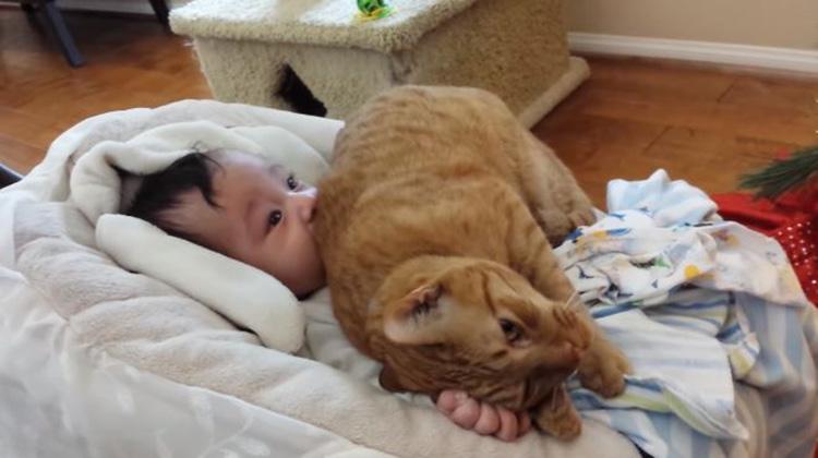 Gatto affettuoso con un bambino