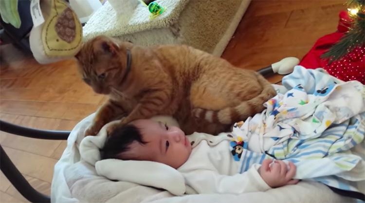 Gatto che gioca con un bambino