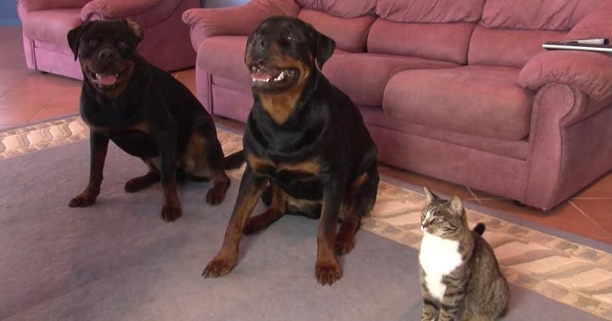 Gatto con due cani