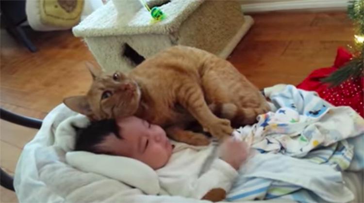 Gatto insieme ad un bambino