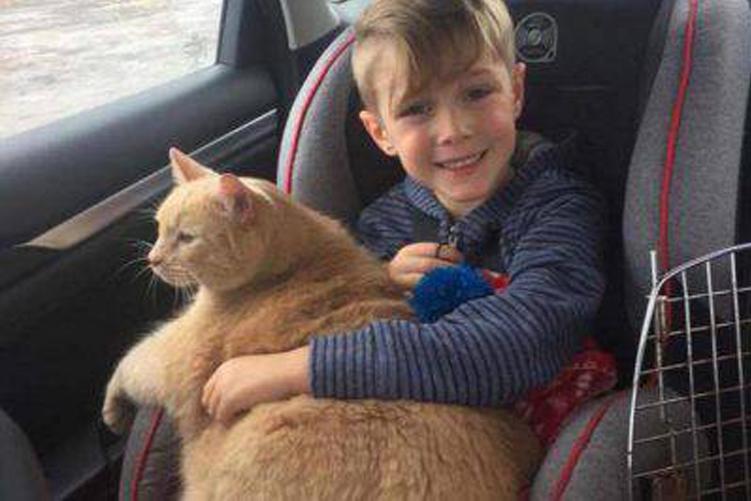 Gatto obeso con un bambino