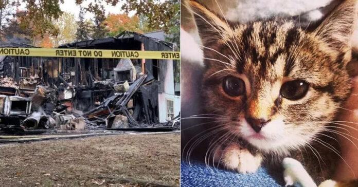 Gatto-salva-la-famiglia-da-un-incendio