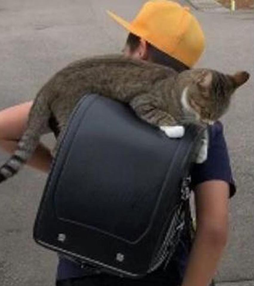 Gatto su uno zaino con un bambino