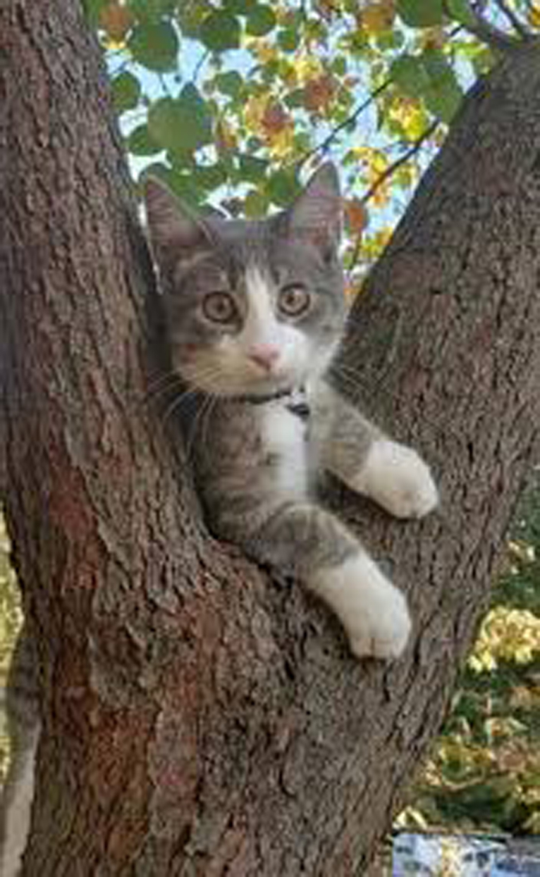 Il gattino Baxter