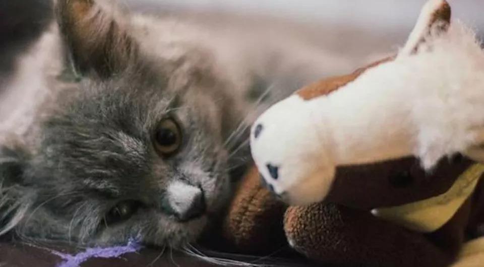 Il-gatto-Bagheera