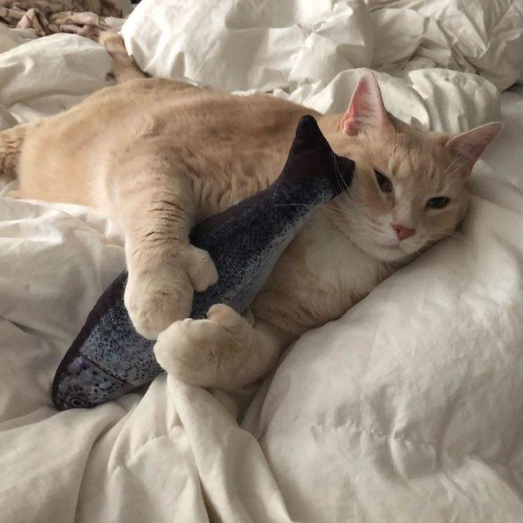 Il gatto Bronson