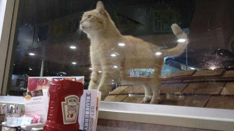 Il gatto Denns