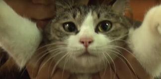 Il gatto Jack