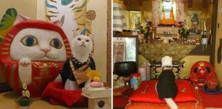 Il gatto Koyuki