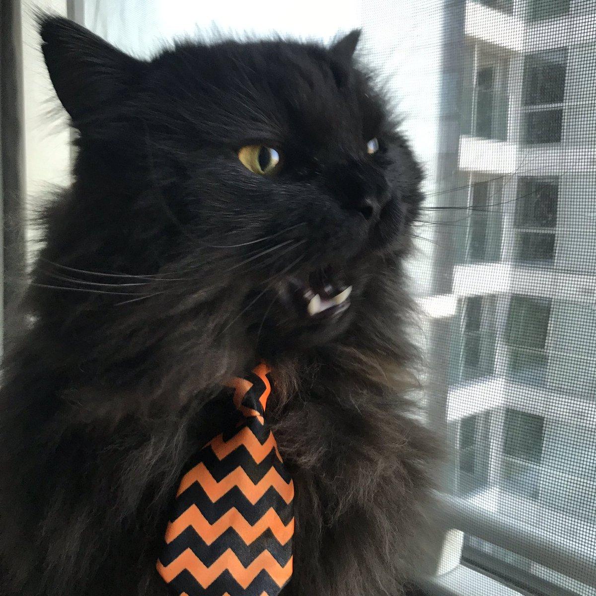 Il gatto Mr London