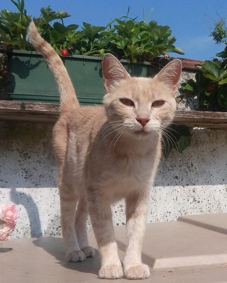 Il gatto Peaches