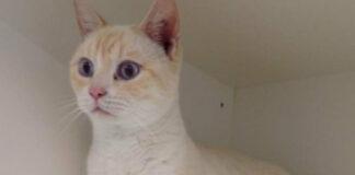 Il gatto Sigmund
