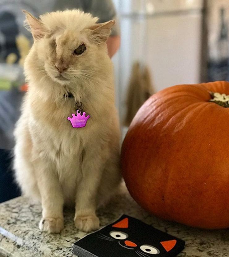 Il gatto Tommy