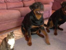 Il video del gatto Didga