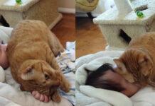 Il video del gatto affettuoso con un bambino