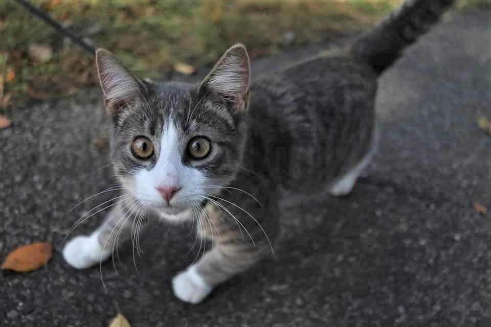 La storia del gattino Baxter