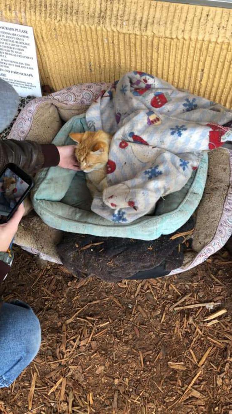 La storia del gatto Denns