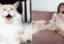 La storia del gatto Lotus