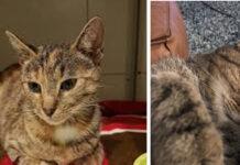 La storia del gatto Szyszka