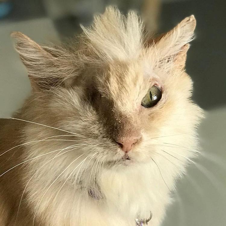 La storia del gatto Tommy
