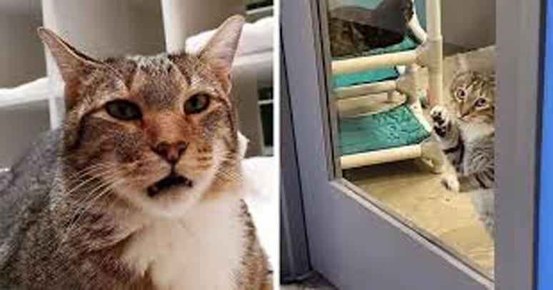 La vicenda del gatto Quilty