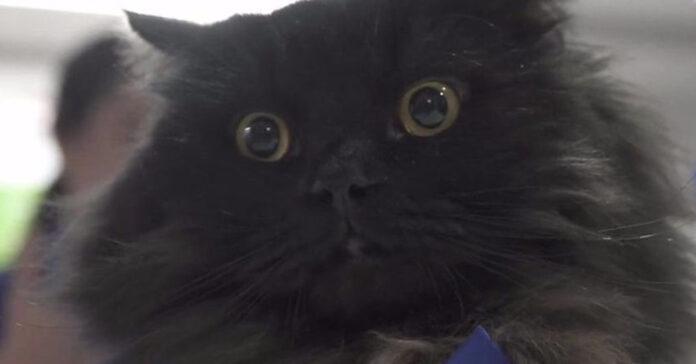 Mr. London gatto
