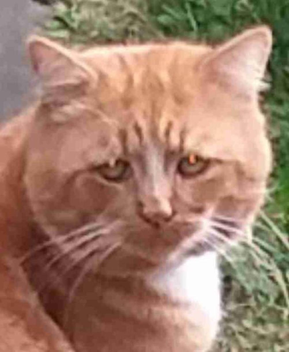 Primo piano di un gatto triste
