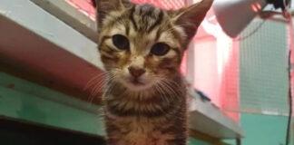 Roma-gattino