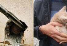 Salvataggio di un gattino incastrato nel muro a Roma