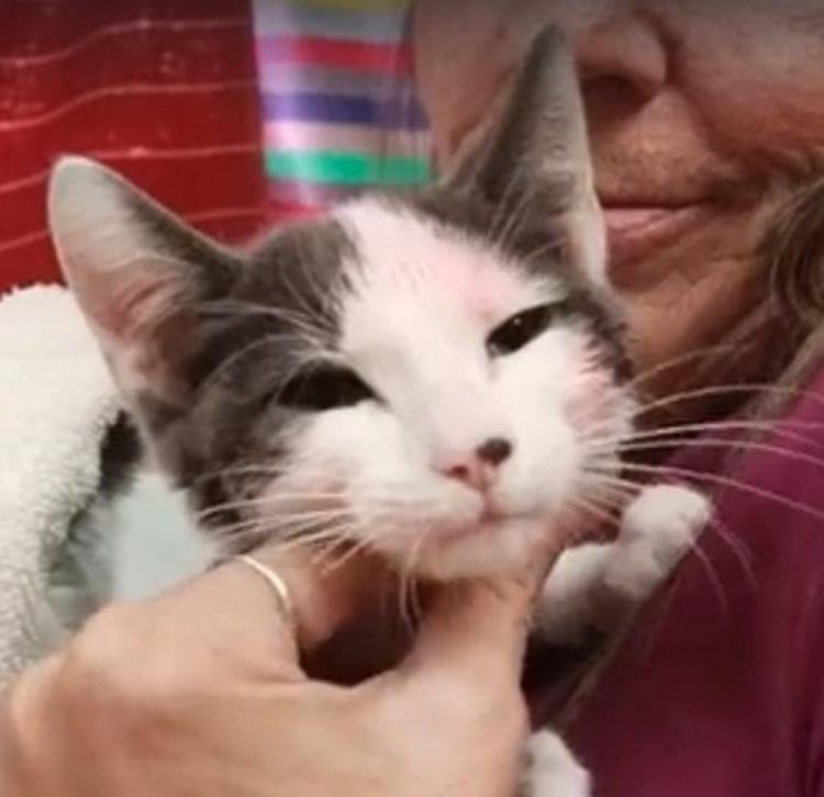 Storia del gattino Freedom