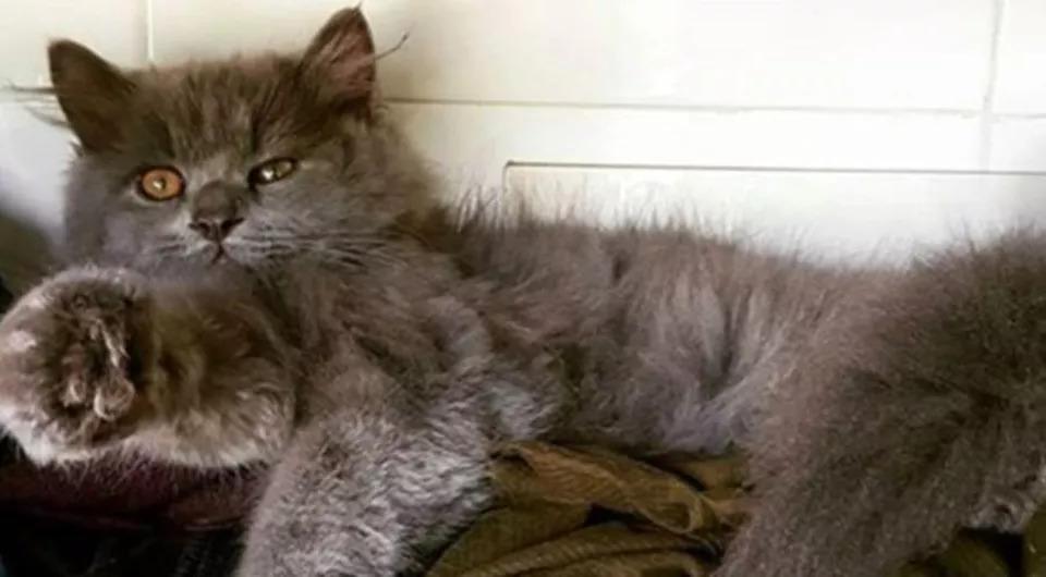 Storia-del-gatto-Bagheera