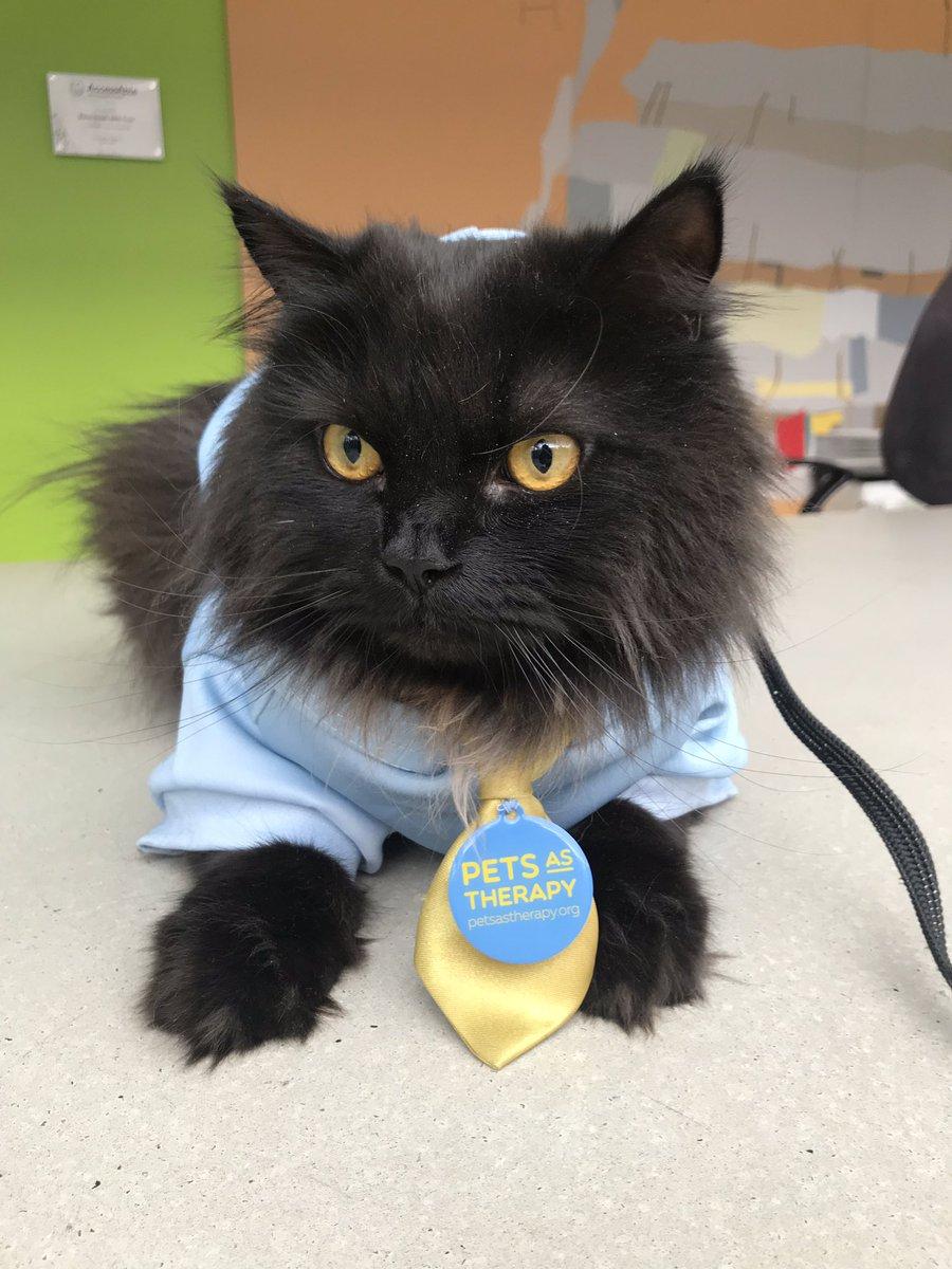 Un gatto da Pet Therapy