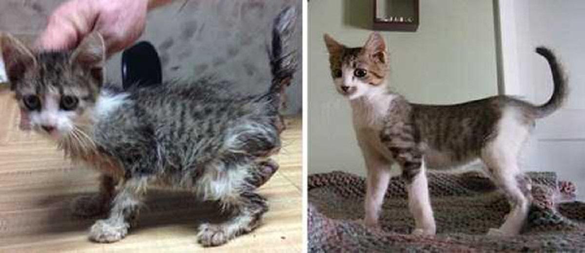 gattino adottato cresce in salute
