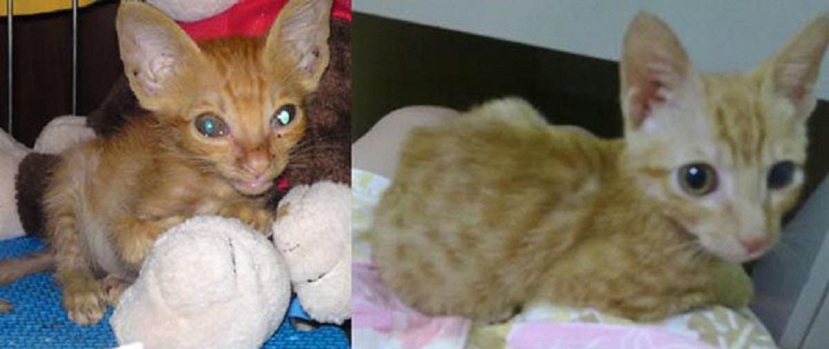 gattino adottato e guarito