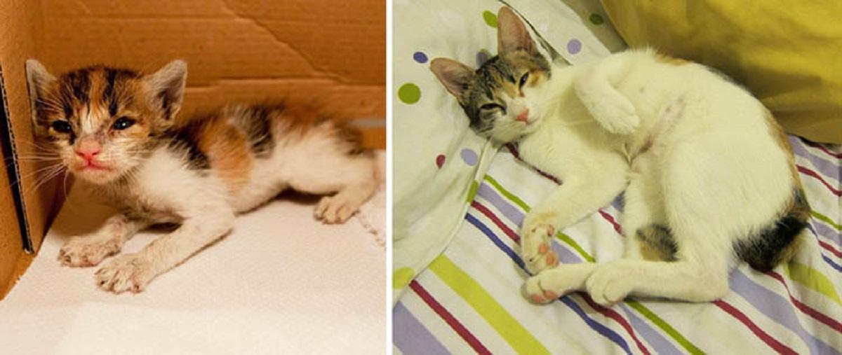 gattino denutrito e adottato